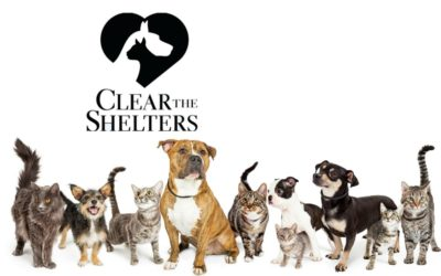 Help Clear the Shelters August 12th-19th