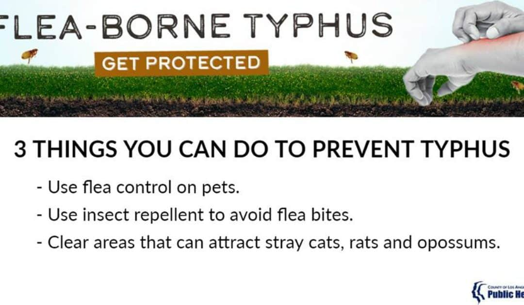 Public Health Reminds Residents to Protect Against Flea-Borne Typhus